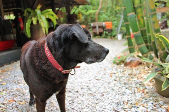 夢の舎の看板犬、姫ちゃん