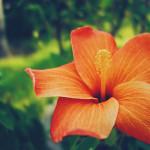 summer_photo02