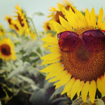 summer_photo06